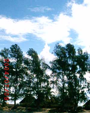 cumulus clouds forming behind trees
