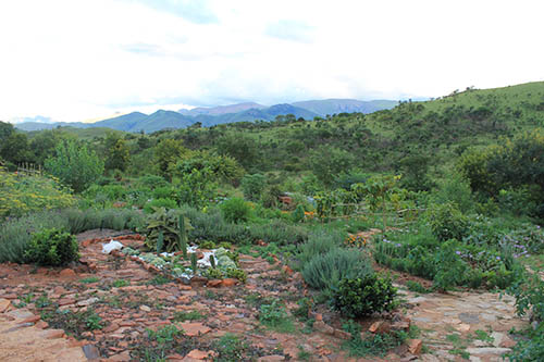 Chamila's permaculture