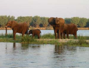 Elephants on Cahora Bassa