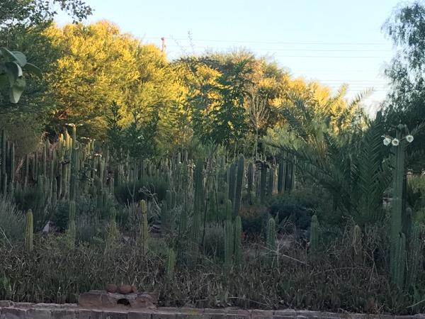 Cactus Garden in Aberdeen